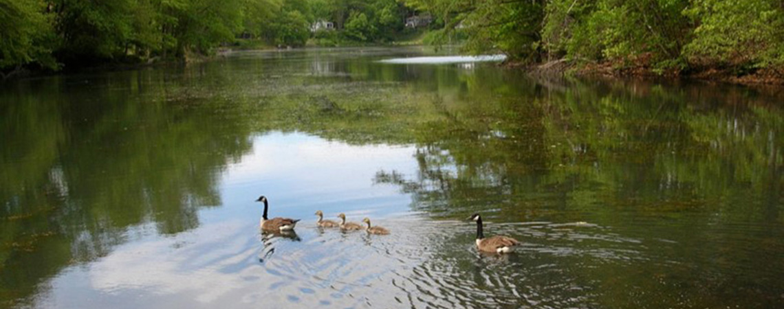 A Lake Community in Northern Westchester